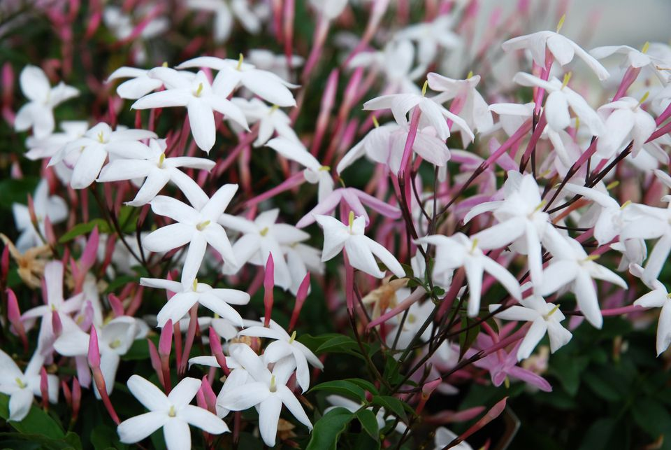 The 10 best smelling plants for your garden mightylinksfo