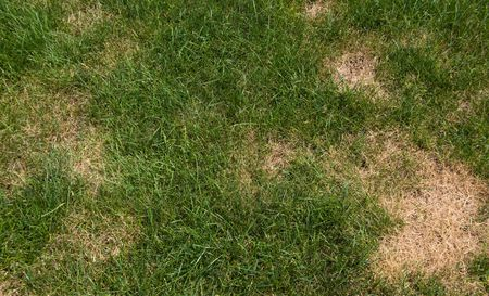 How to to Get Rid of Brown Patch Fungus on Grass