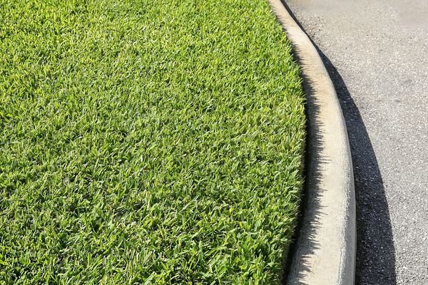 Lawn of St. Augustine grass at a curbside.