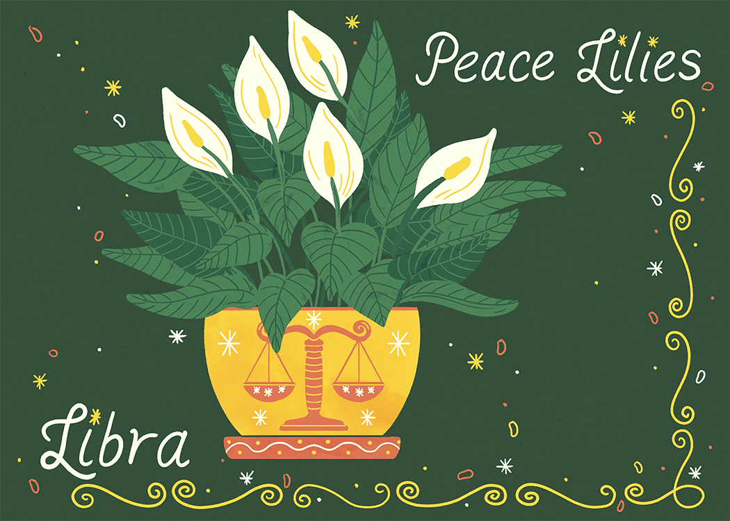 libra peace lilies