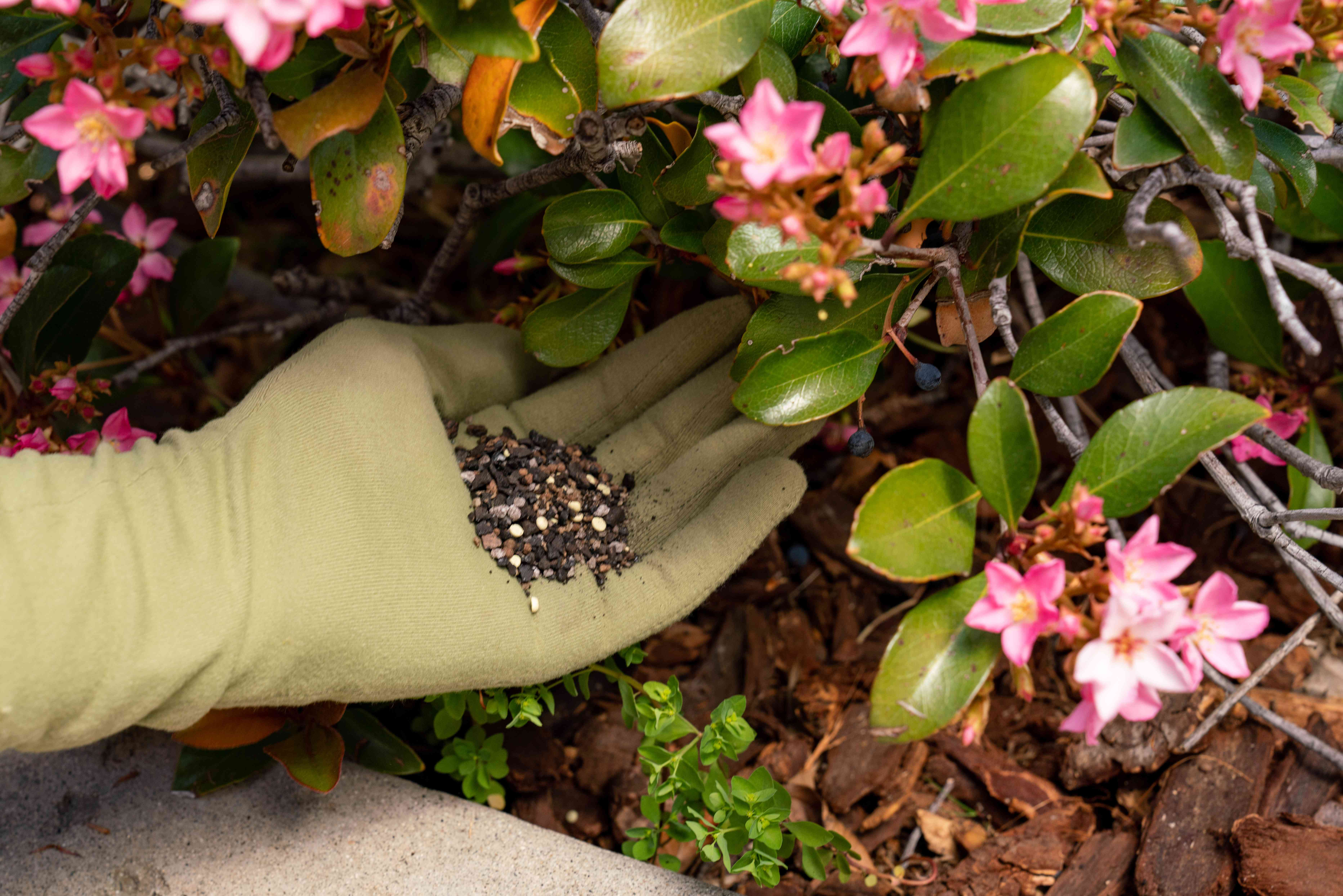 Fertilizer placed with tan glove under flowering plants with pink petals and leaves