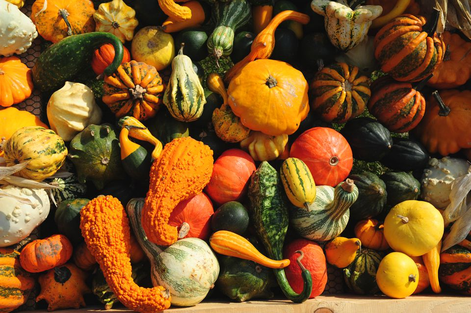 Ornamental gourds piled on each other in sunlight