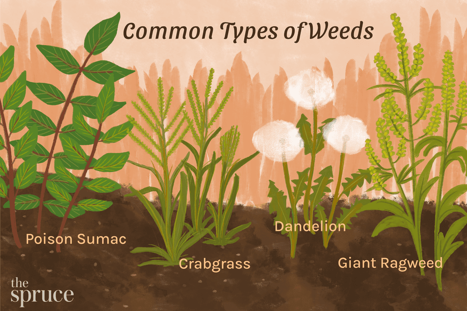 Common Types of Weeds