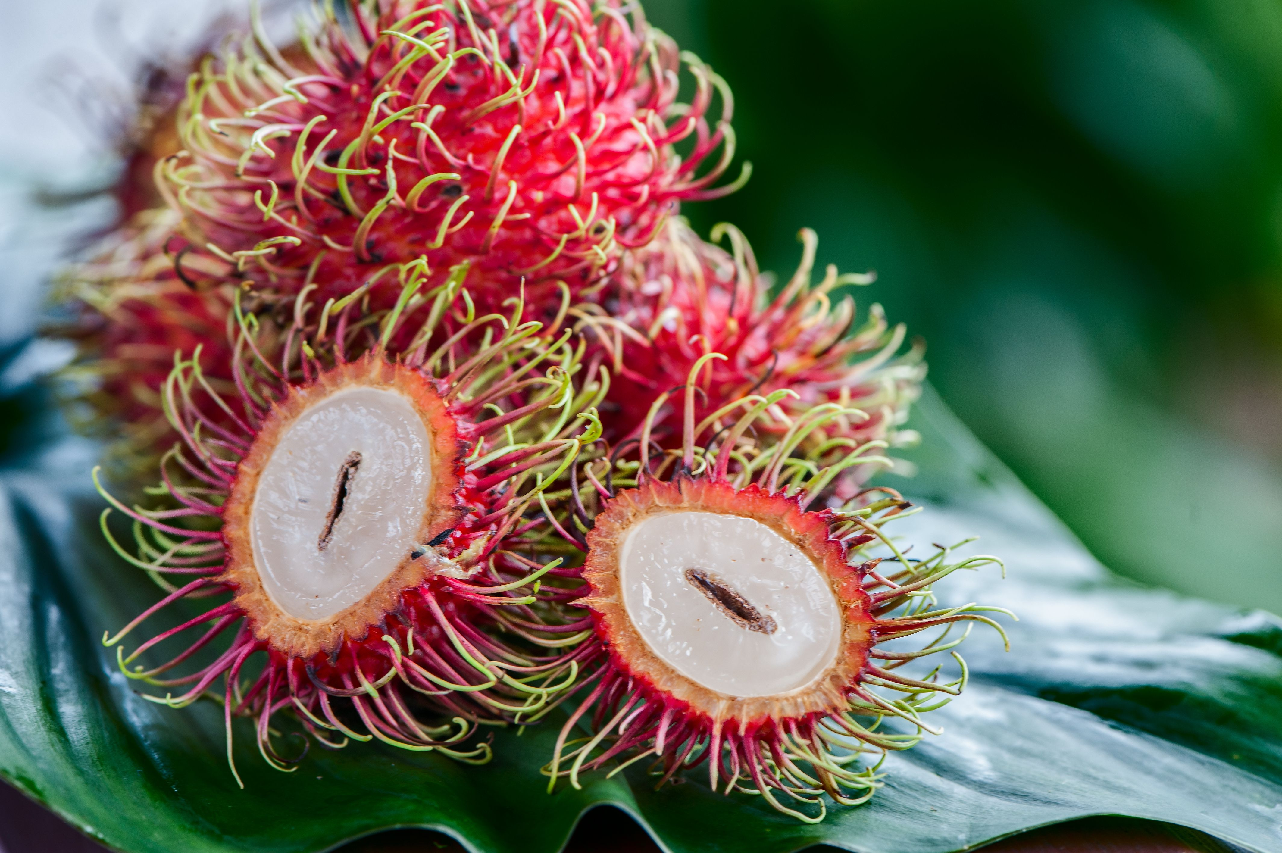 Rambutan in natural conditions on a beautiful tropical background. Exotic fruits