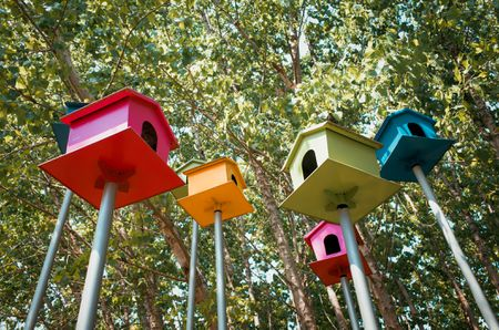 Colorful Bird House In Tree Wood