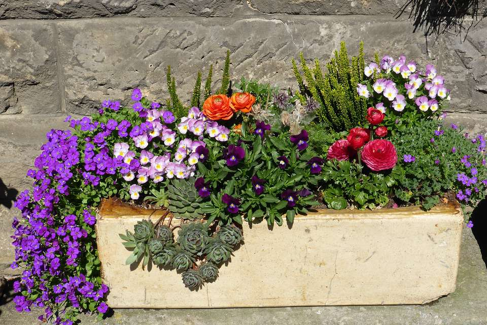 flowers and plants in container garden