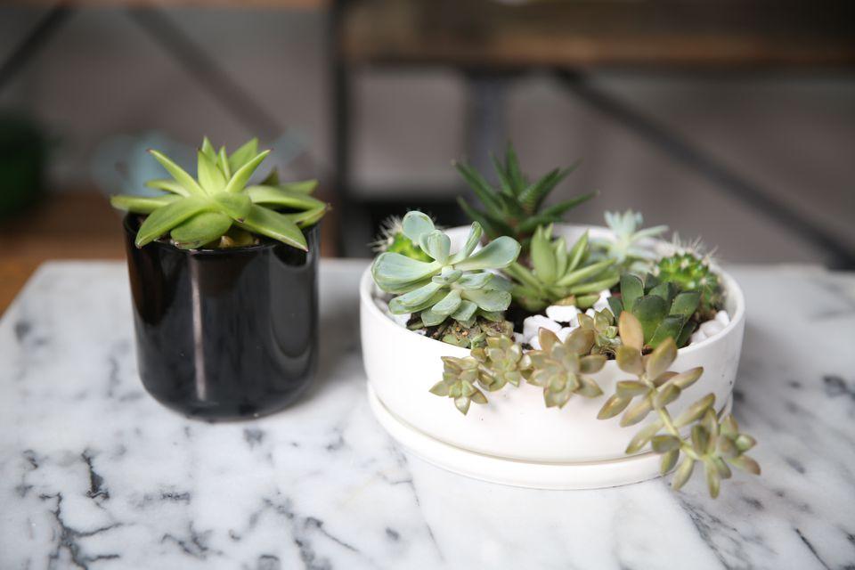 succulent container garden planning
