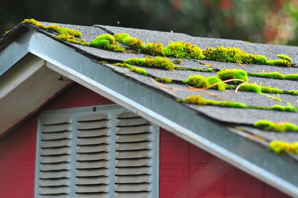 A closeup of moss on roof