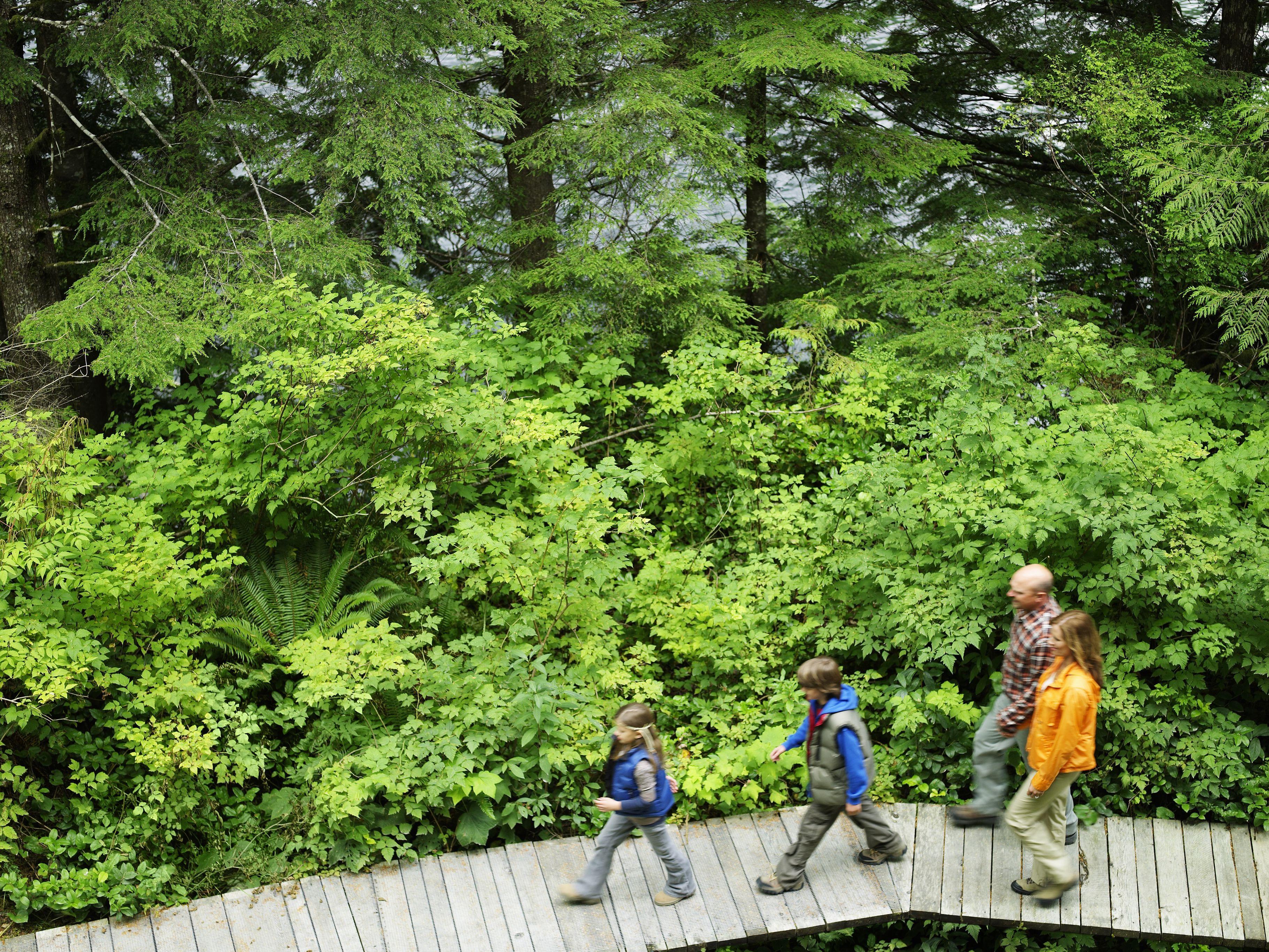 Familia caminando en el camino a través del bosque