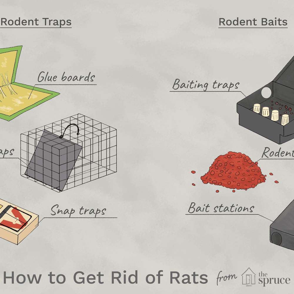 How to Get Rid of Rats: The 2 Best Ways