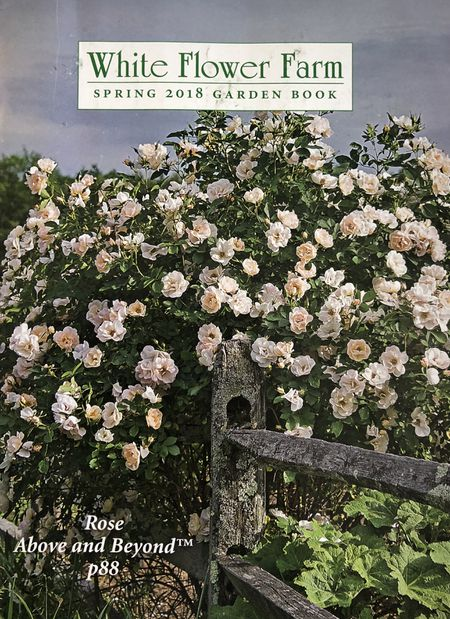 60 free seed catalogs and plant catalogs the 2018 white flower farm catalog mightylinksfo