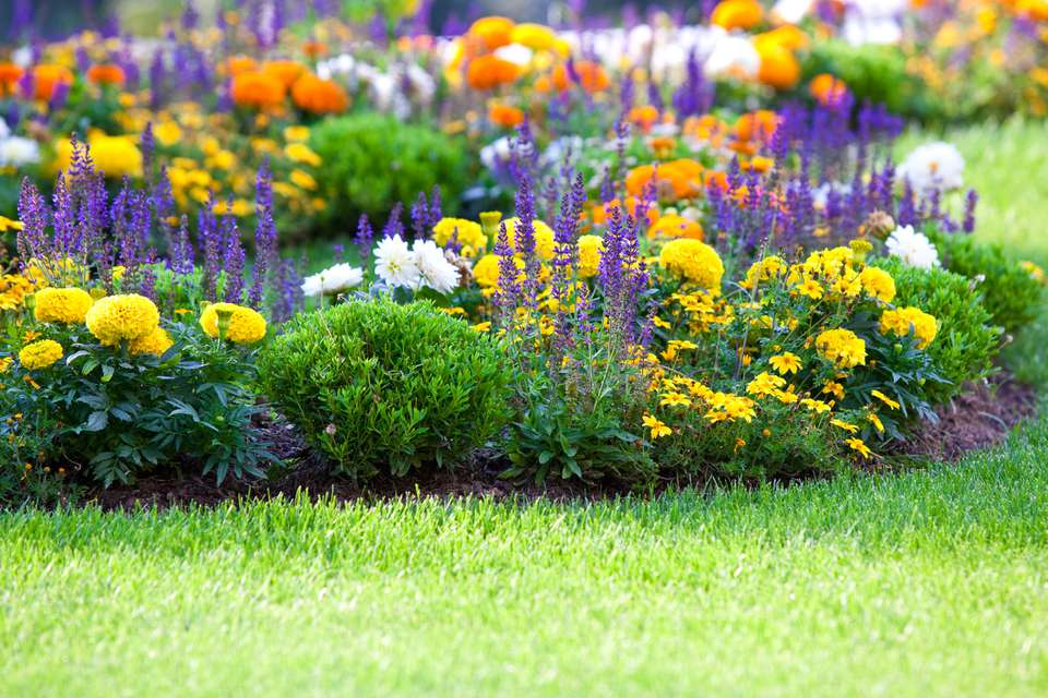 Mulch in a colorful bed of flowers next to a lawn