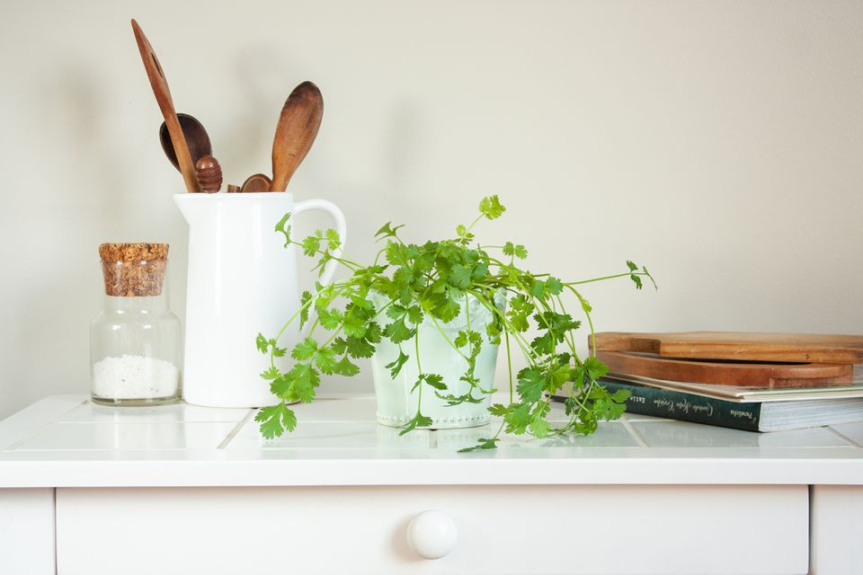 cilantro on a kitchen counter