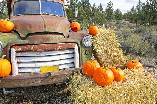 A rusty old truck decorated with pumpkins