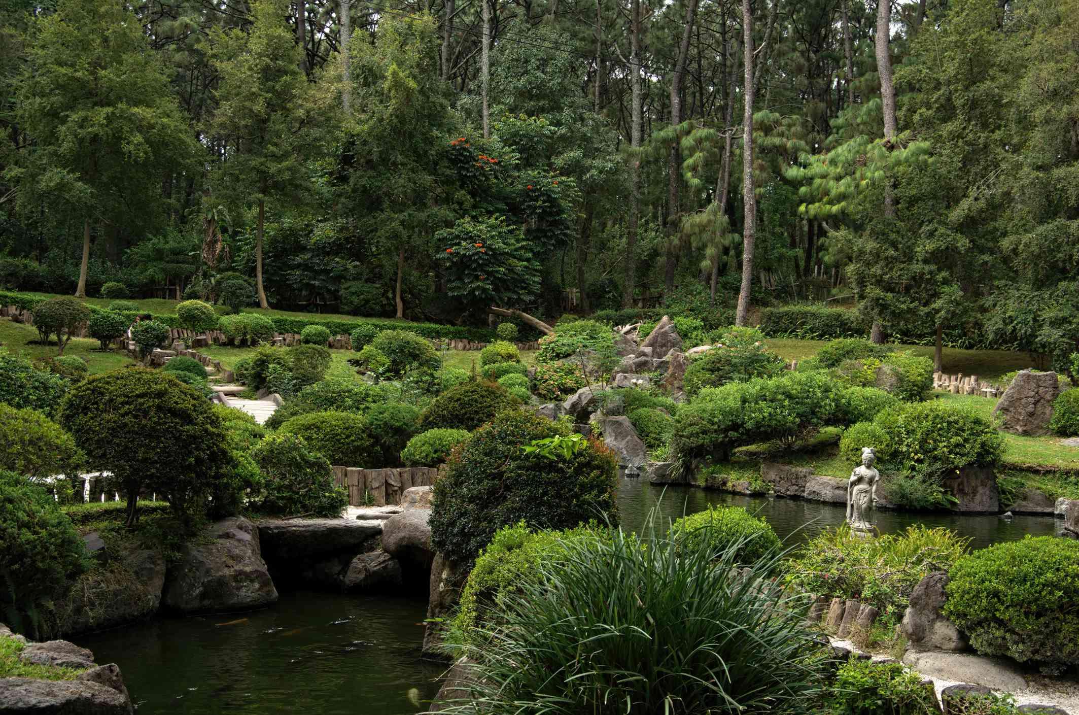A koi pond hidden among bushes.