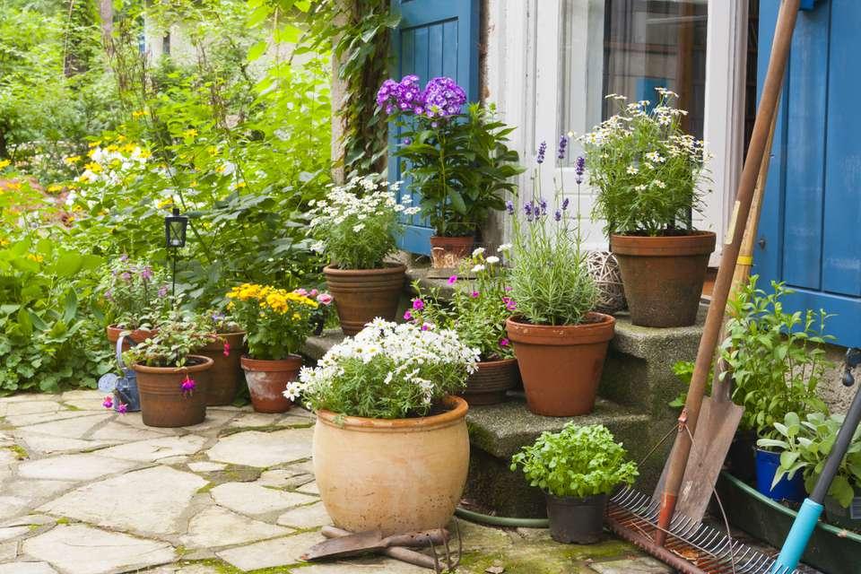 plants on back porch steps