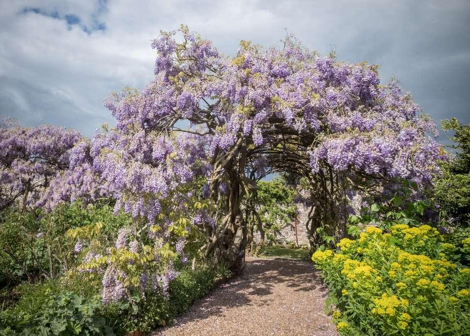 Fresh Purple Flowers On Tree Against Sky