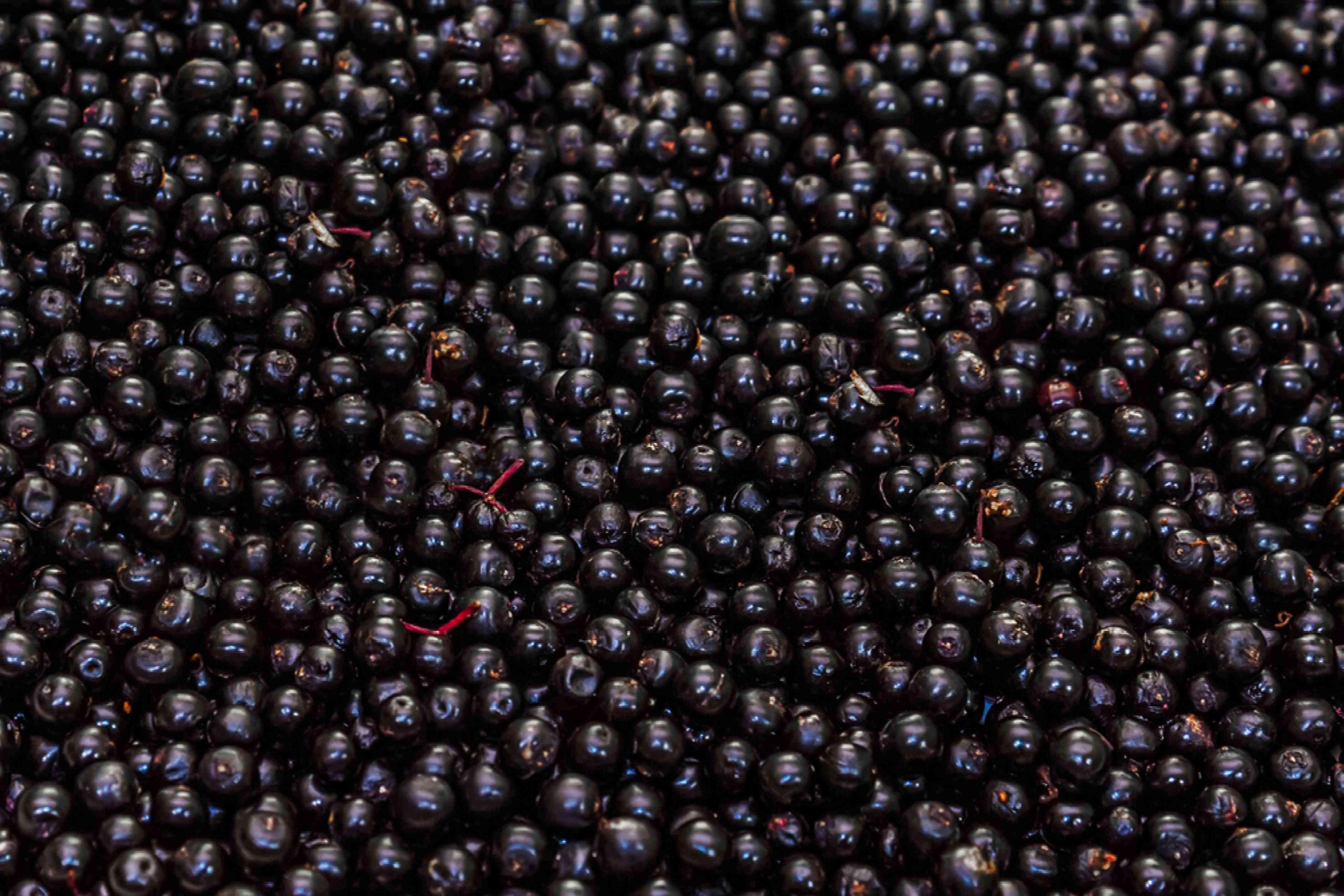 Pile of elderberries