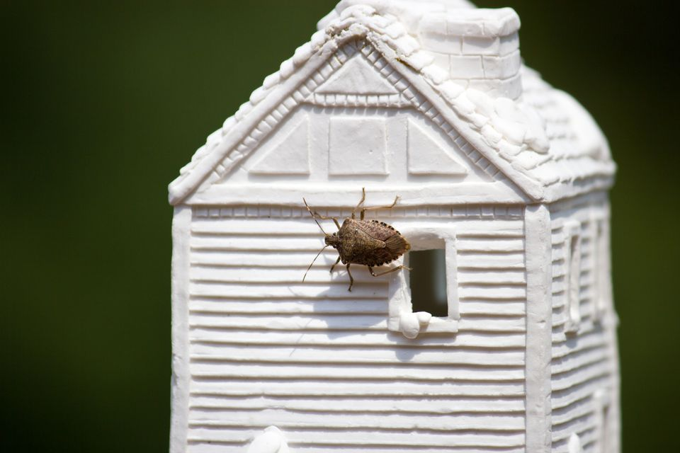 Stink bug on a miniature clay house