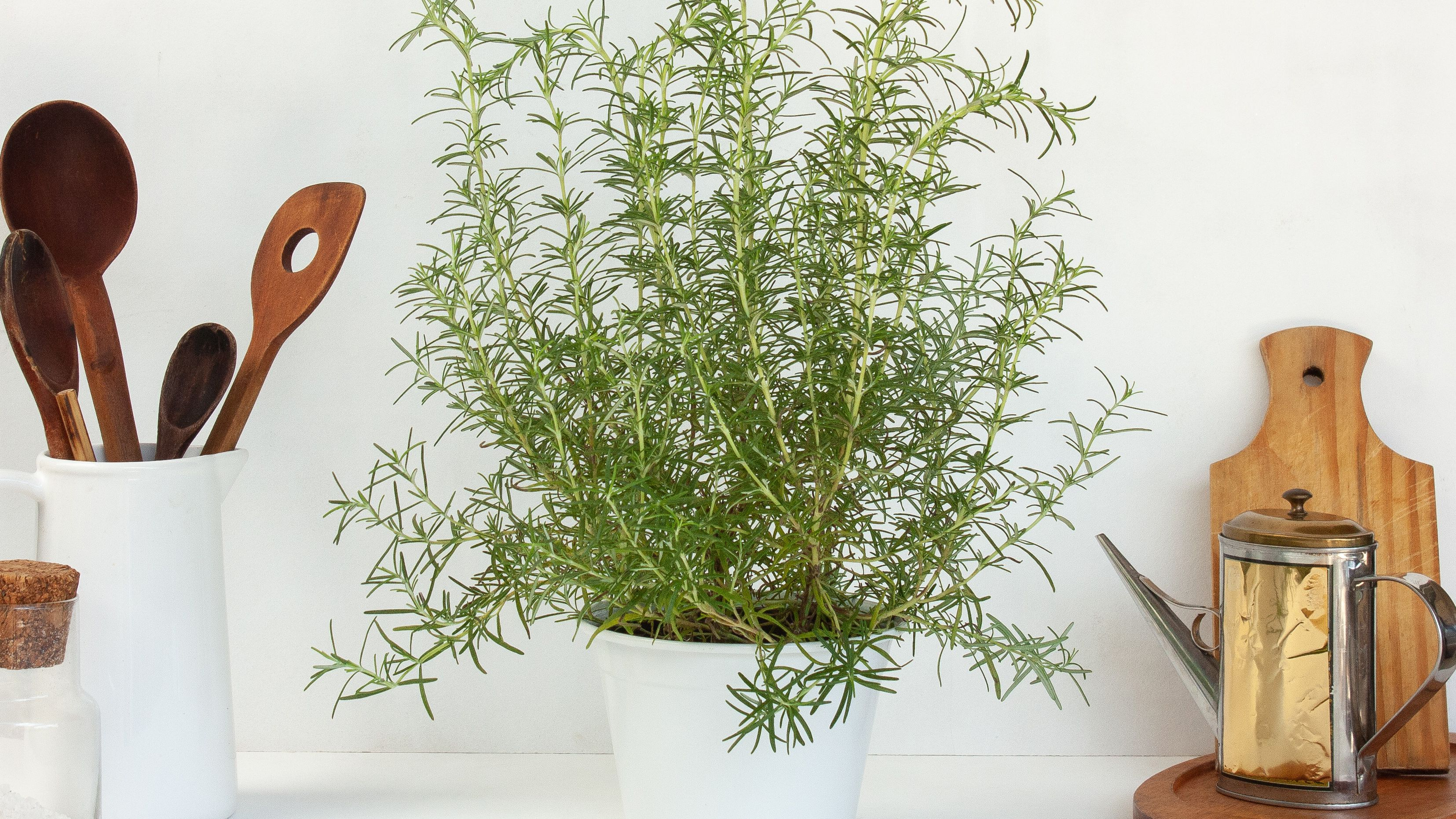 Rosemary: Indoor Plant Care & Growing Guide