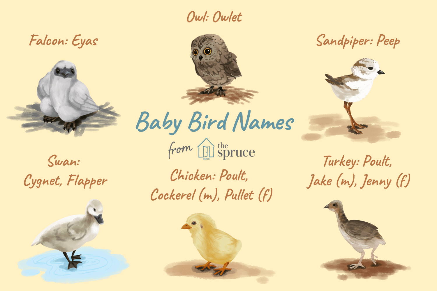Baby Bird Names for Specific Bird Families