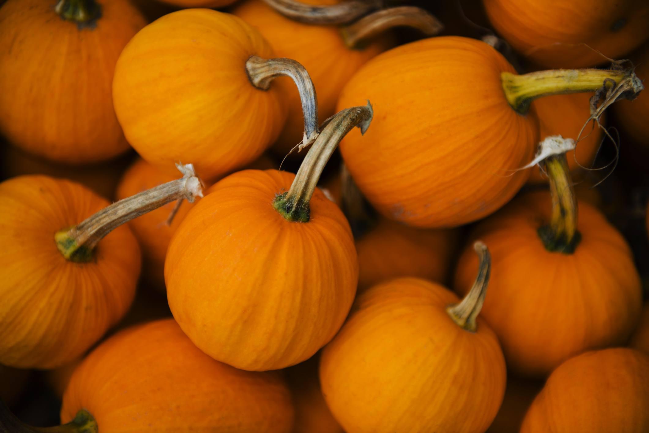 A group of mini pumpkins