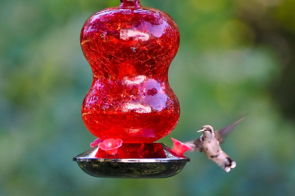 Cracked Glass Hummingbird Feeder
