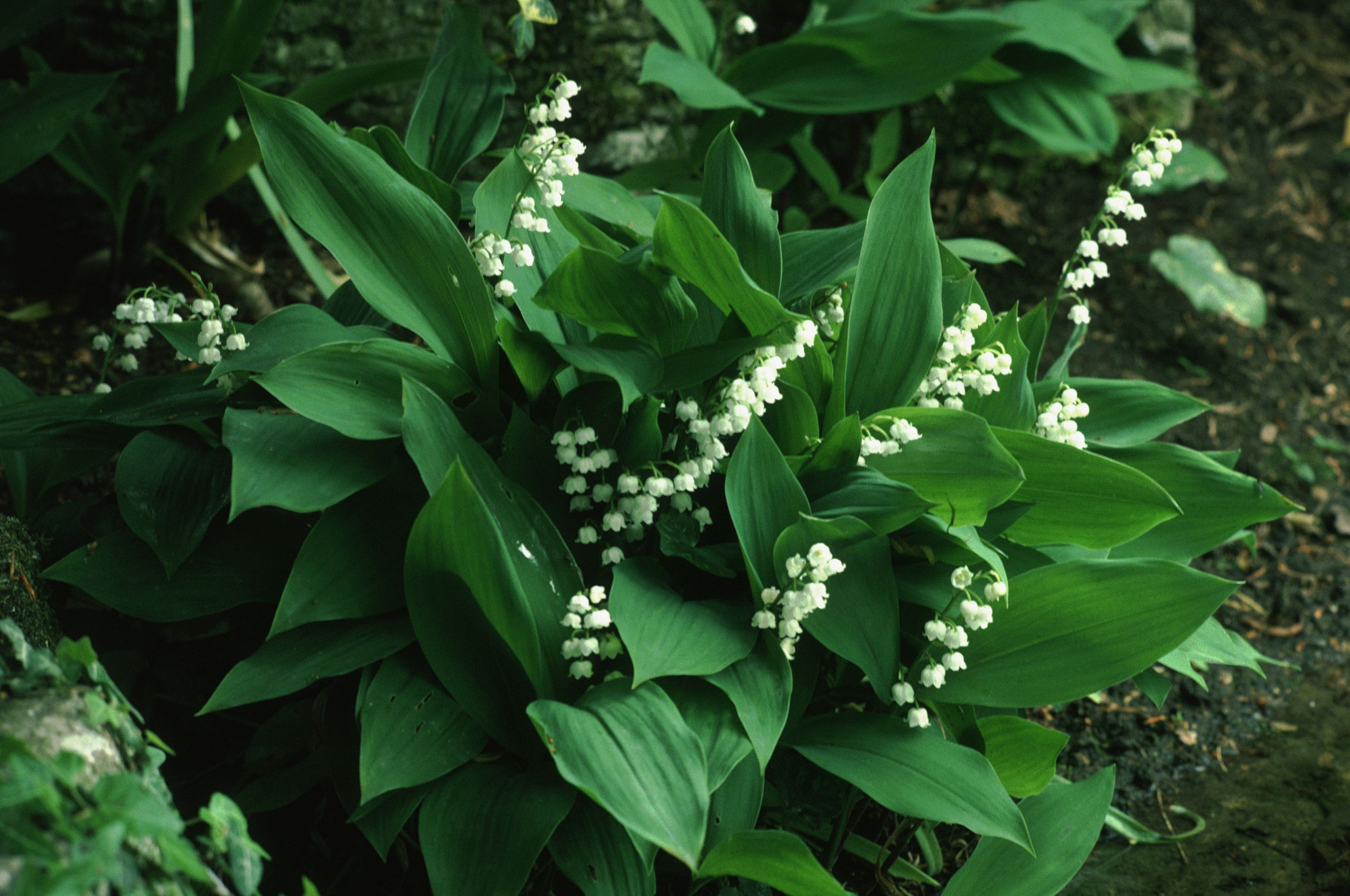 The Best Fragrant Flowers To Grow In Your Garden