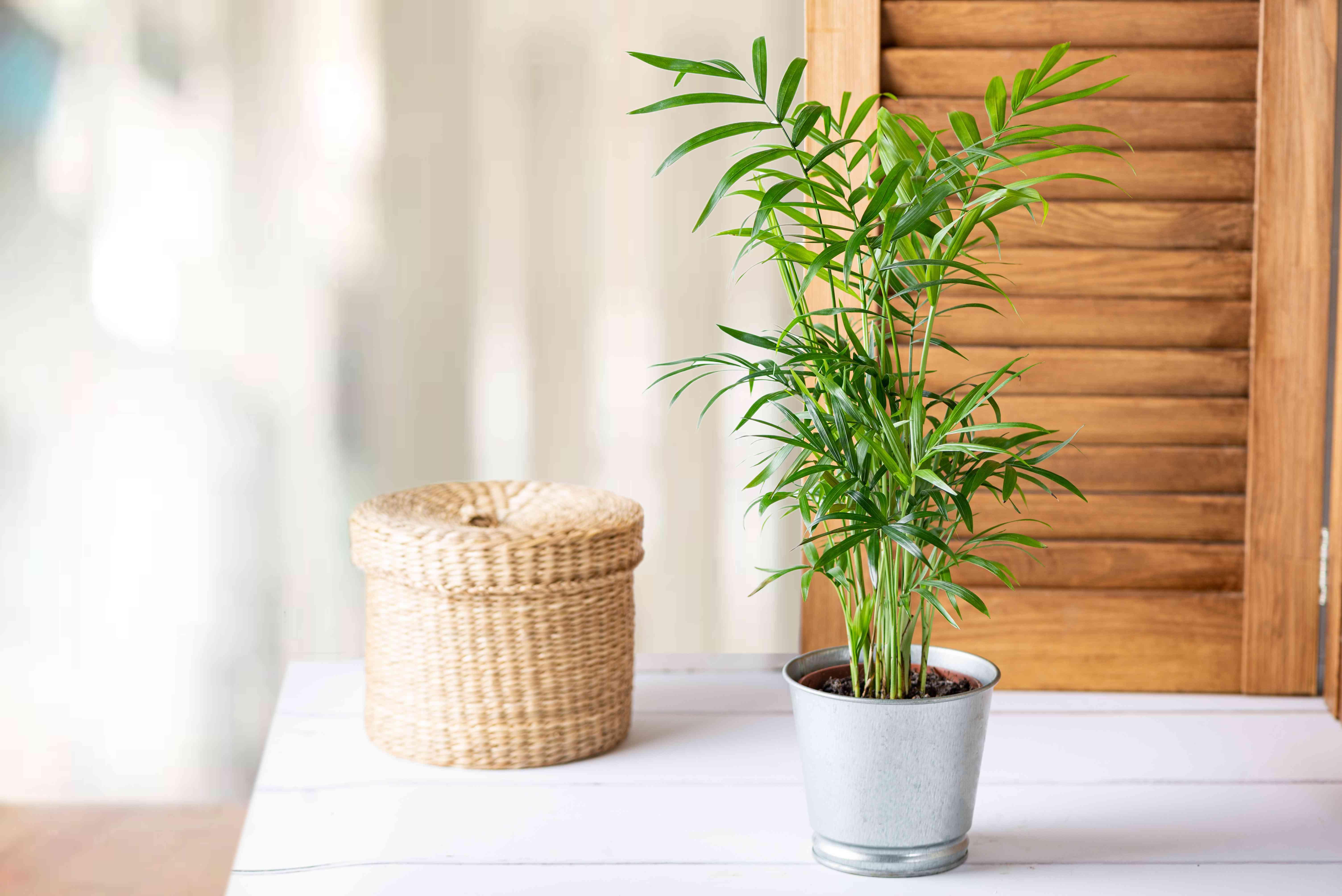 house plants as an air freshener