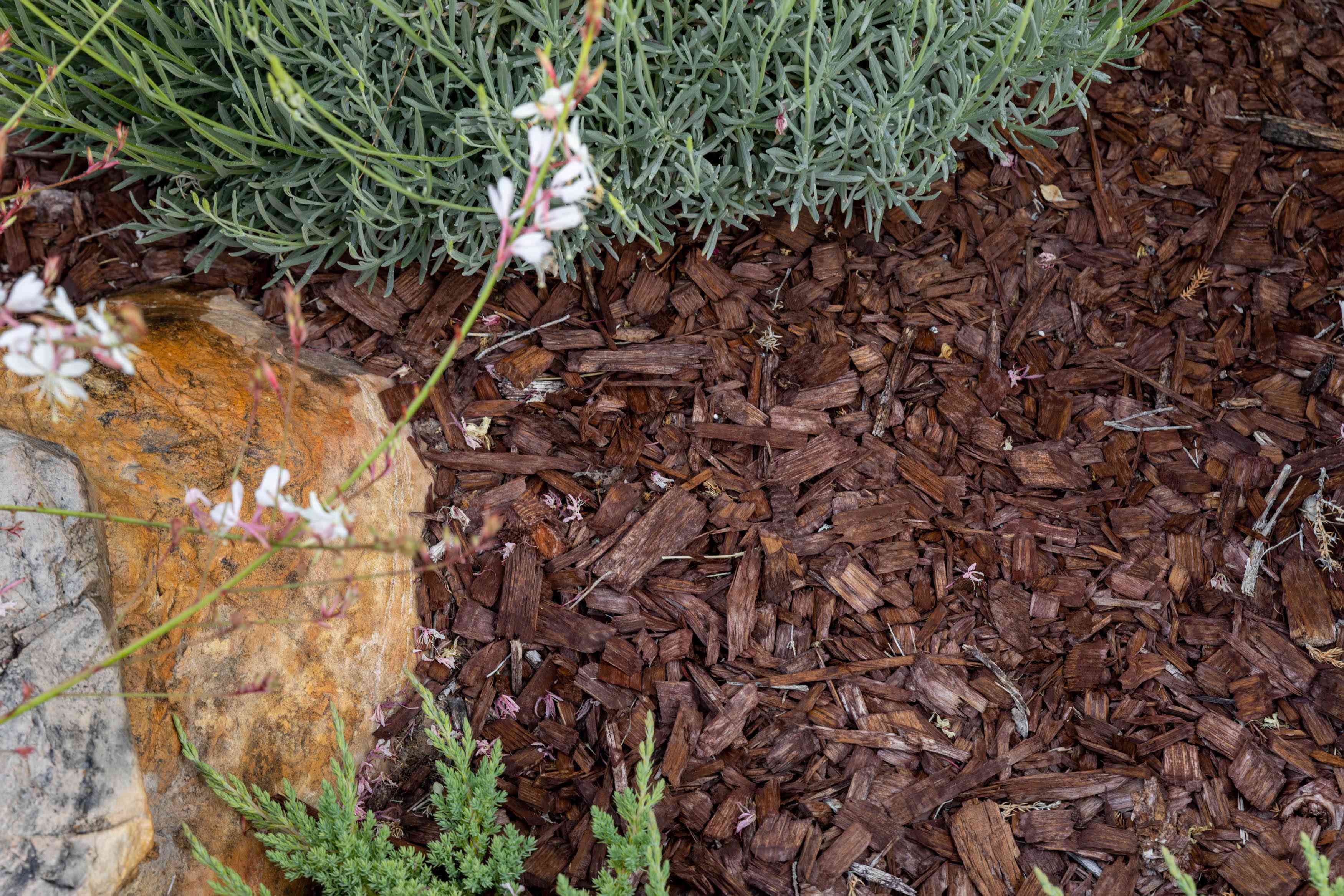 Mulch covering soil next to outdoor plants and rock