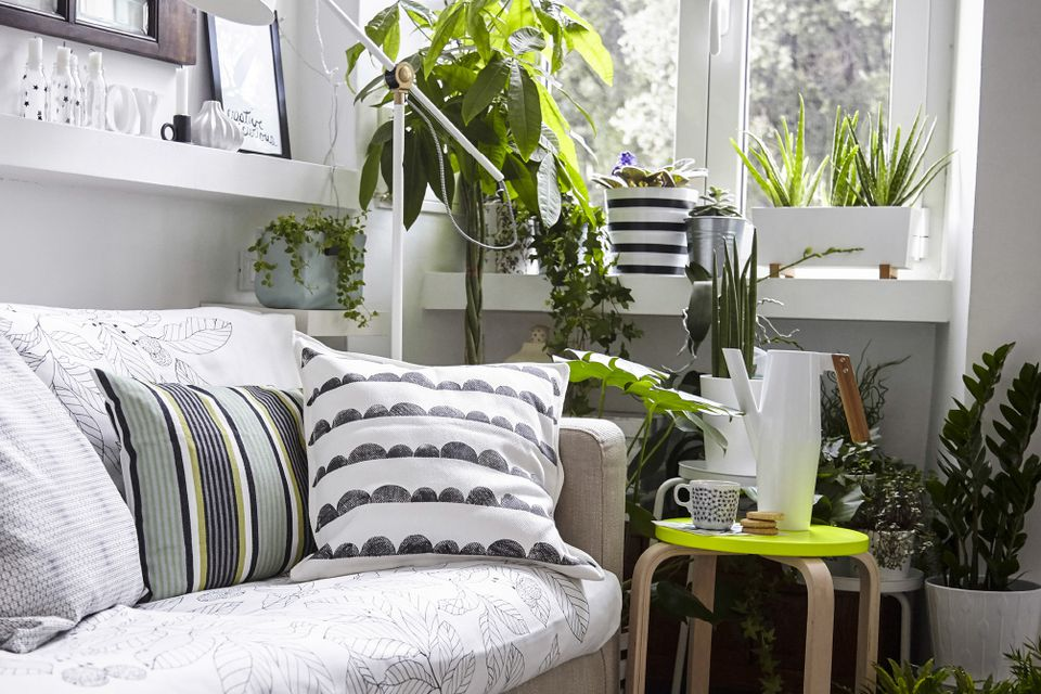 Decorating With Plants In A Dark House on vine house plants, large house plants, small house plants, green house plants, names of house plants, beautiful house plants, best house plants, dumb cane house plants, great house plants, care of house plants, home depot house plants, hardy house plants, easy house plants, tall house plants, home decor with plants, colorful house plants, unique house plants, rare house plants, purple house plants, common house plants,