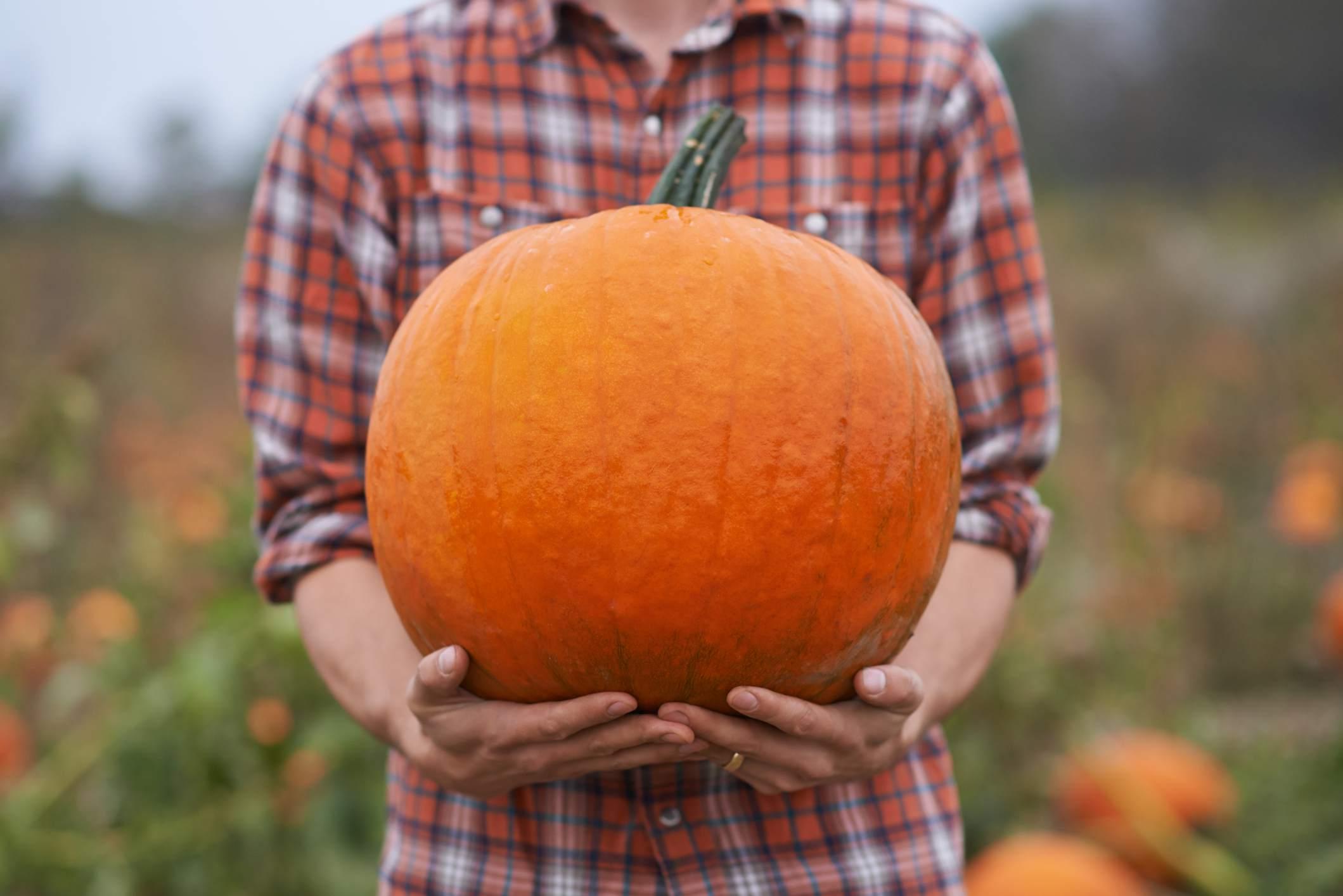 person holding a pumpkin