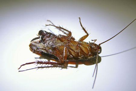 Image result for Best Pest Prevention Tips And Tricks