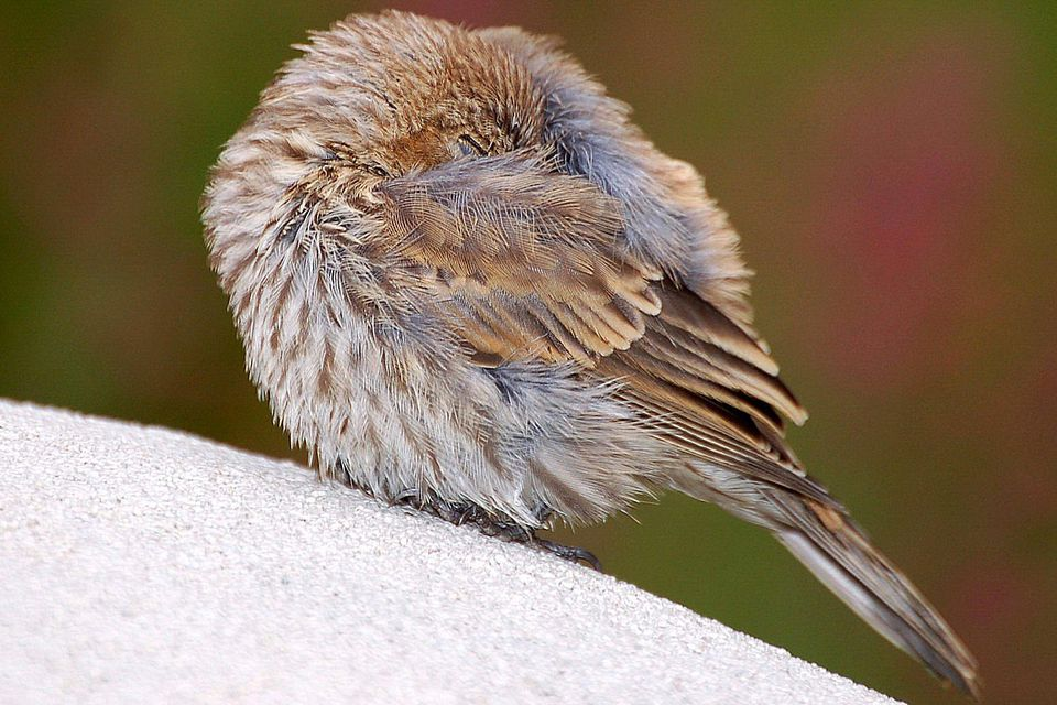 Sleeping Bird