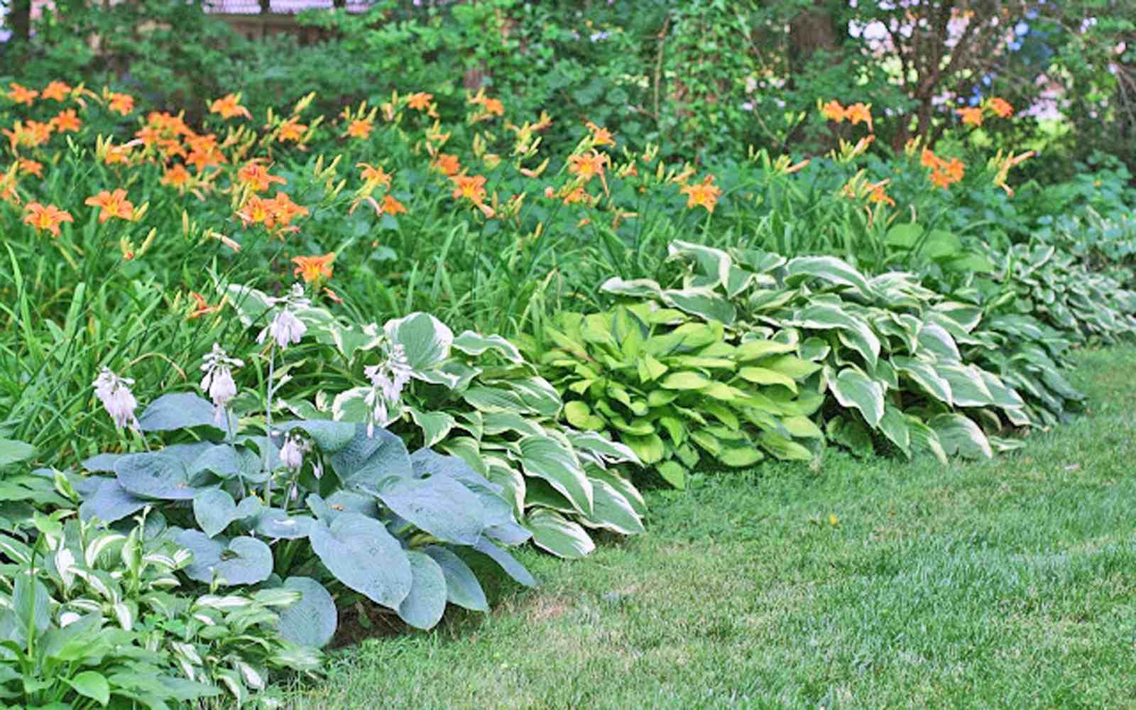 15 Garden Edging Ideas on and hosta flower bed, hosta garden ideas around large tree, hosta garden design,