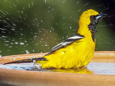 Colors That Attract Birds - Bird-Friendly Landscaping