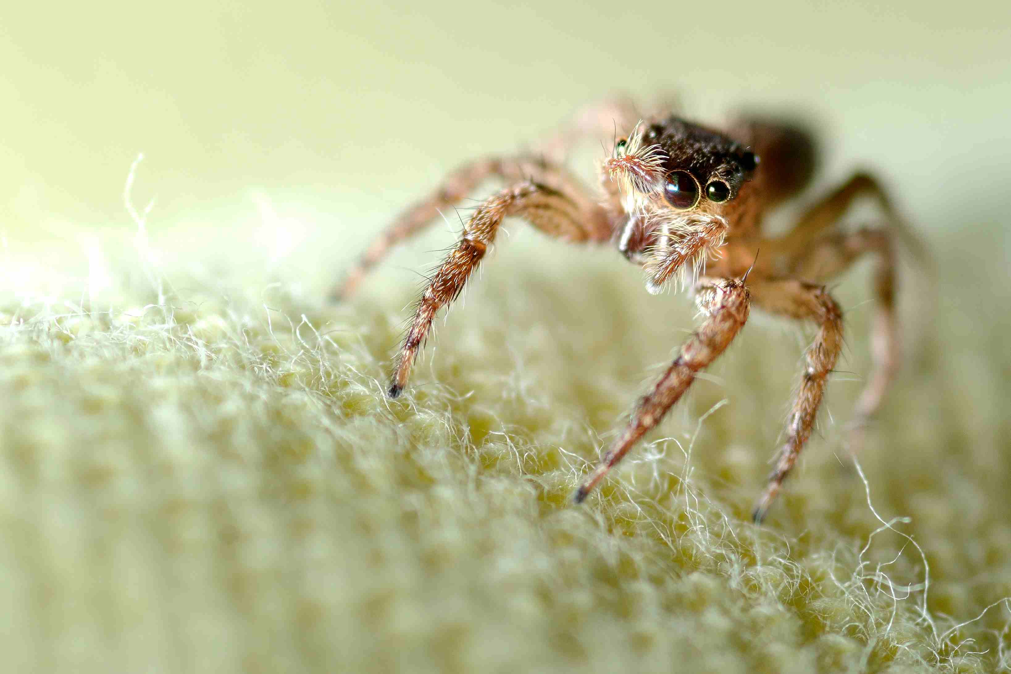 The 7 Most Common Types of House Spiders