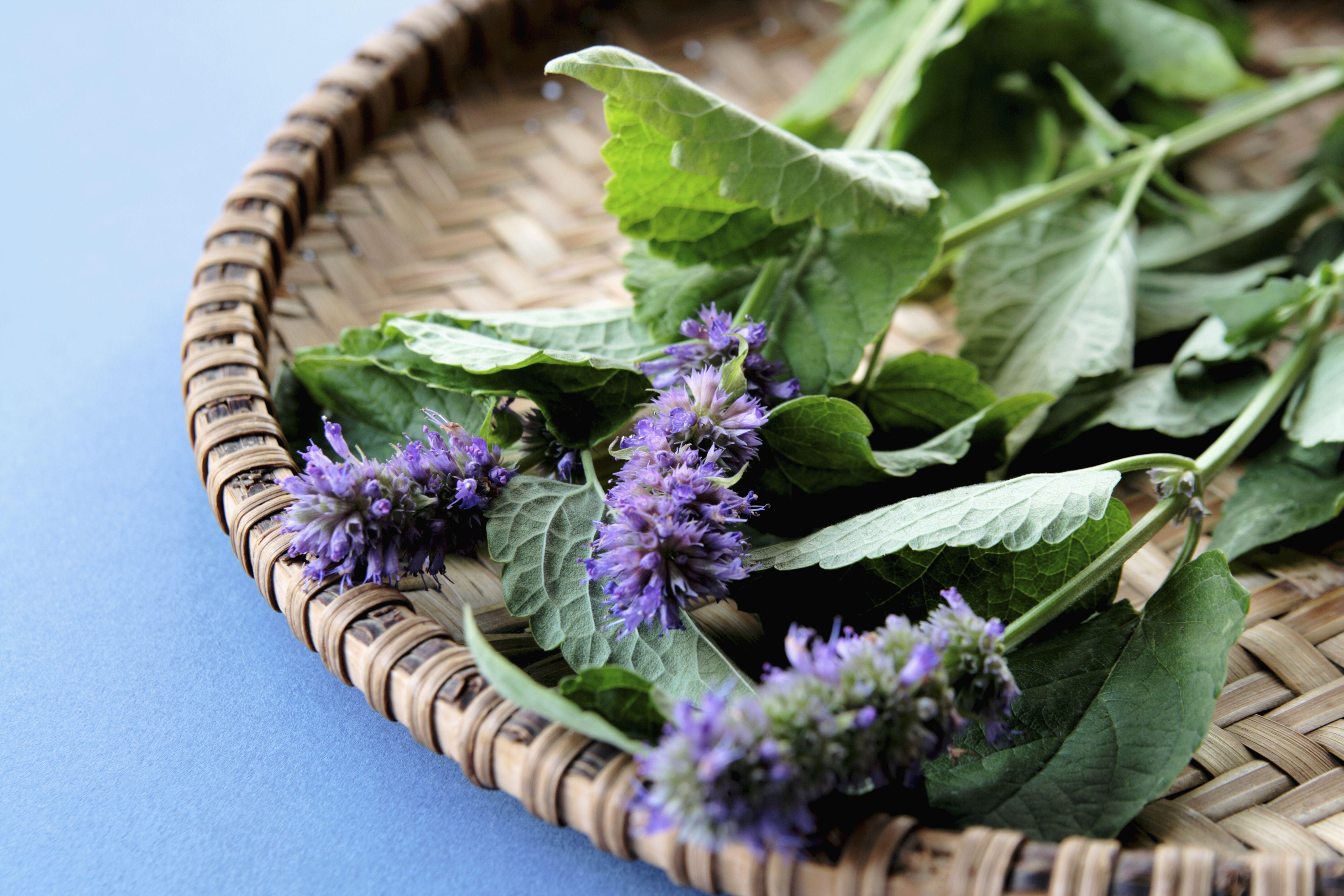 the herb garden gourmet grow herbs eat well and be green