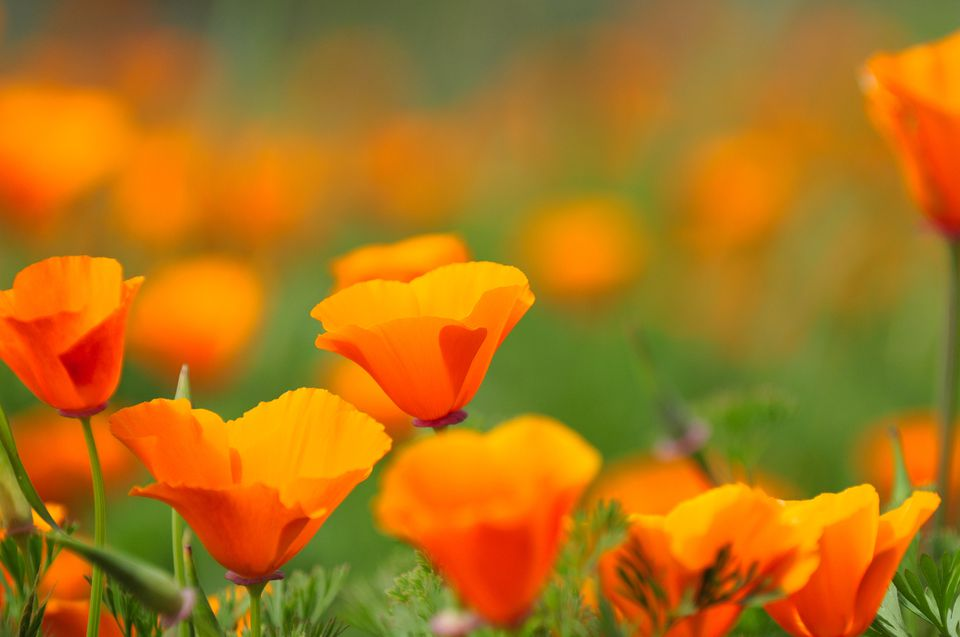 Different Types of Orange Flowers