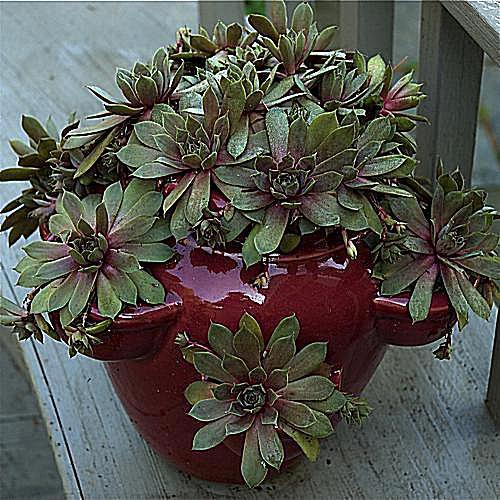imagen de jardinería en macetas de flores de narciso blanco como el papel