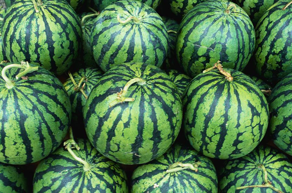 Dozens of watermelons in a pile.