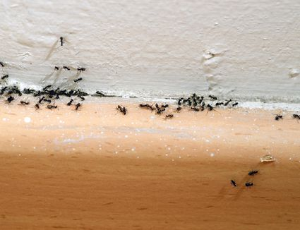 how to kill ants without pesticide