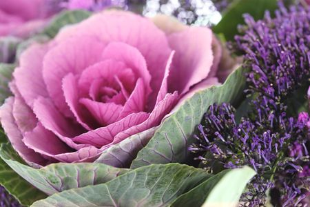 Carole Gomez Photodisc Getty Images Ornamental Cabbage And Kale Look