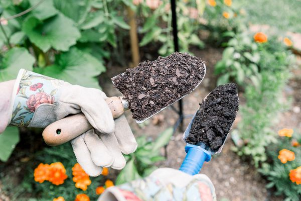 gardener examining top soil and compost