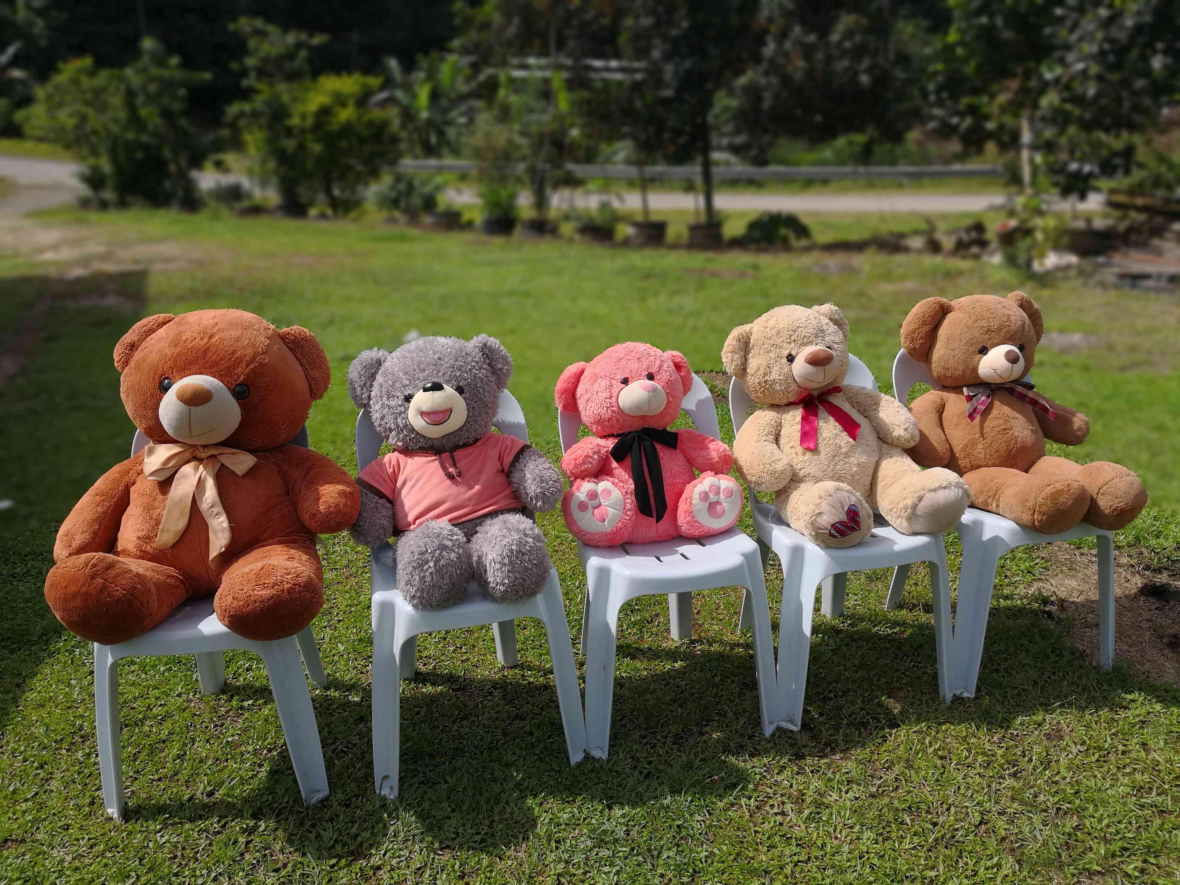 Stuffed Teddy Bears On Chairs In Lawn
