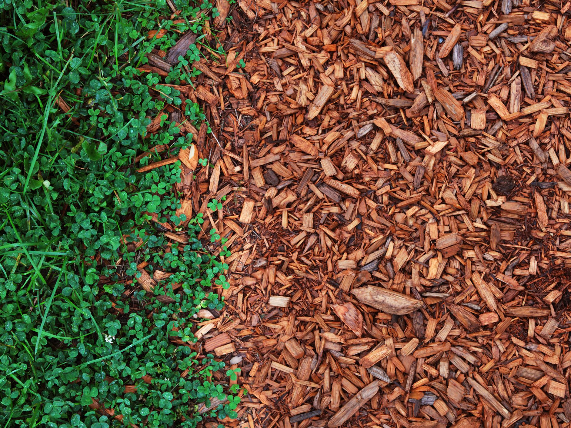 What Is Mulch And Which Should You Use Where
