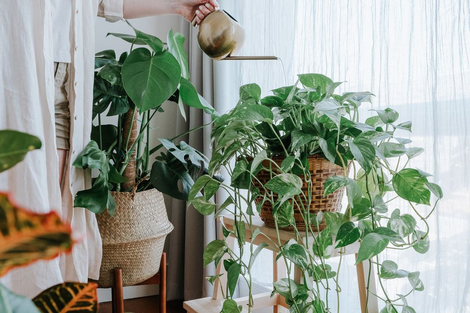 woman using liquid fertilizer on houseplants
