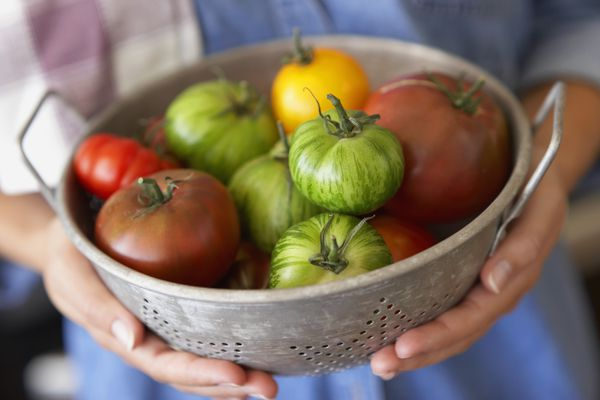 A dozen of heirloom tomatoes in colander that woman is holding.