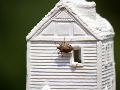 Stink bug on a miniature clay house