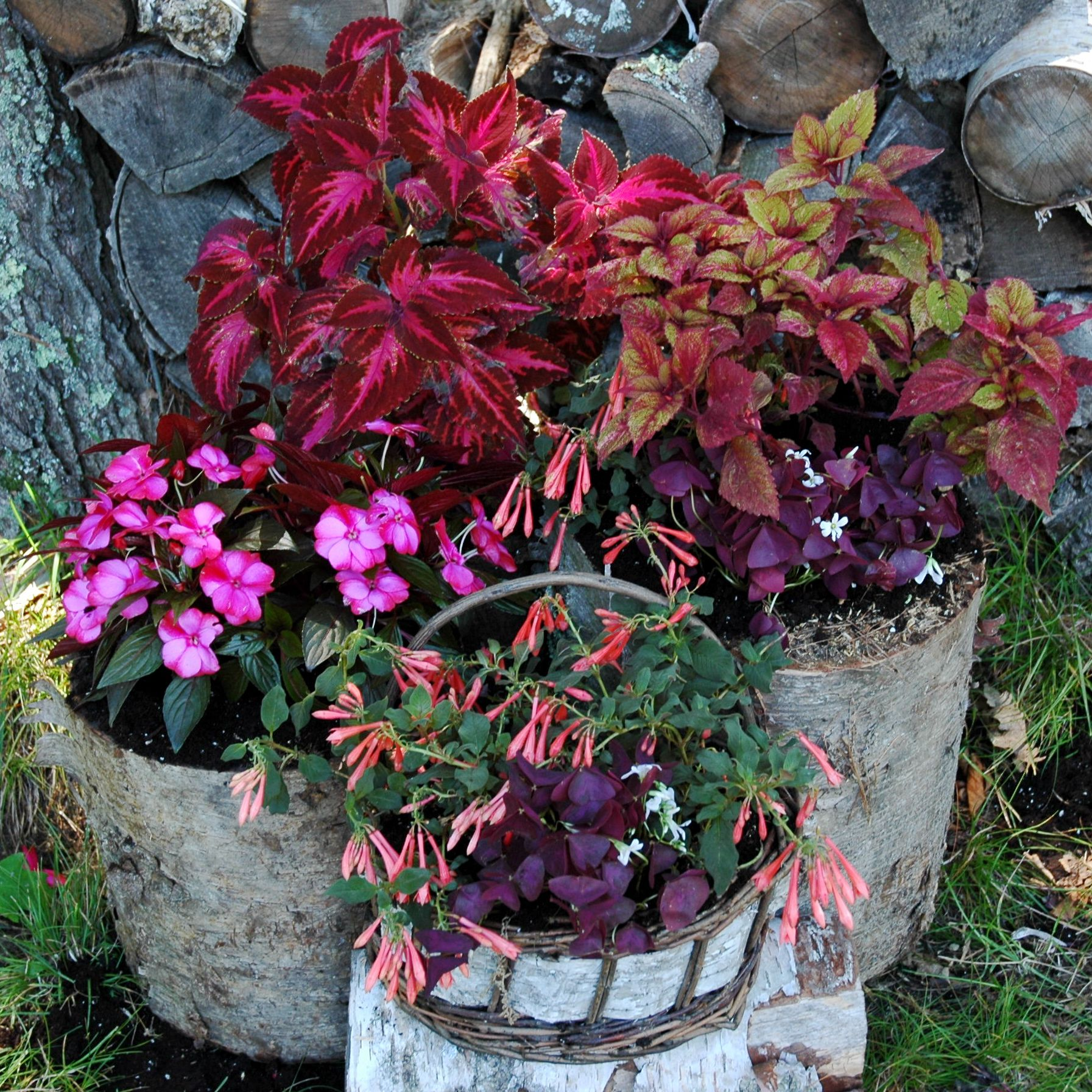 Log container garden filled with plants